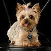 Pets : 1 gallery with 17 photos